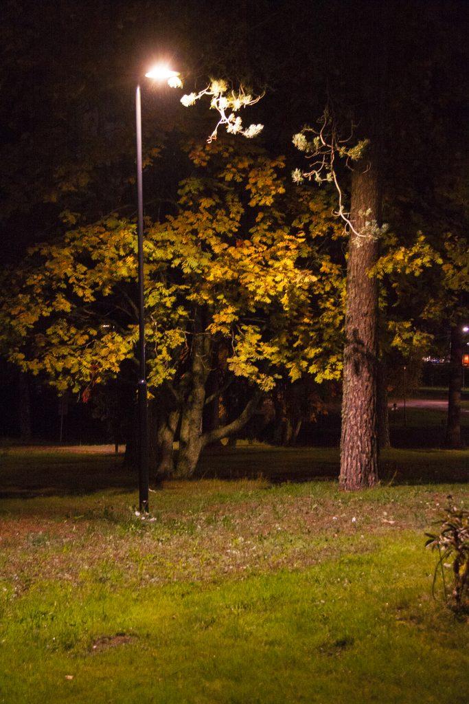 Pajulan pihan isot puut pääsevät oikeuksiinsa oikeanlaisessa valaistuksessa.